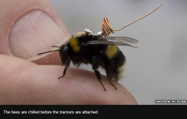 Bee behaviour mapped by tiny trackers